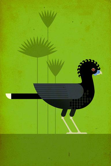 Scott Partridge - Illustration - Blue-Billed Curassow