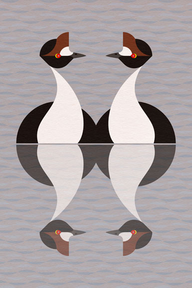 Scott Partridge - Illustration - Hooded Grebe