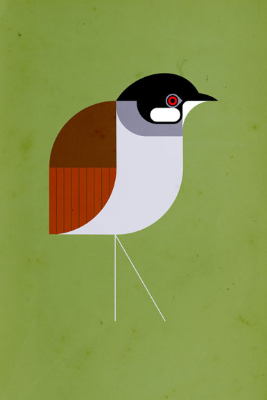 Scott Partridge - Illustration - Jocotoco Antpitta