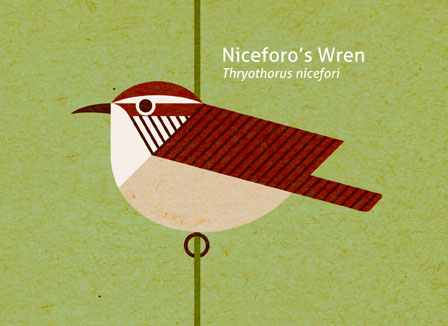 Scott Partridge - Illustration - Niceforo's Wren
