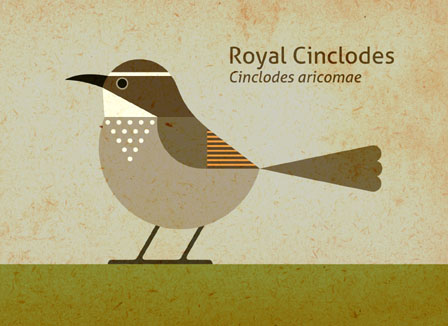 Scott Partridge - Illustration - Royal Cinclodes