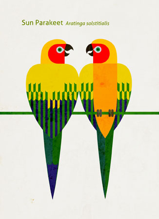 Scott Partridge - Illustration - Sun Parakeet