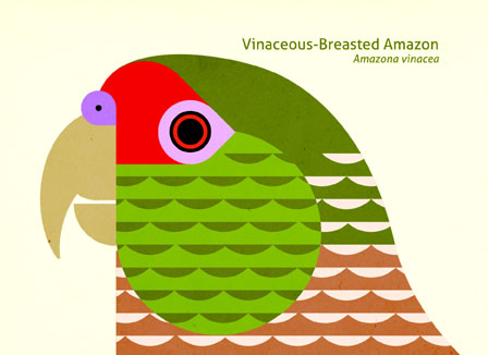 Scott Partridge - Illustration - Vinaceous-Breasted Amazon