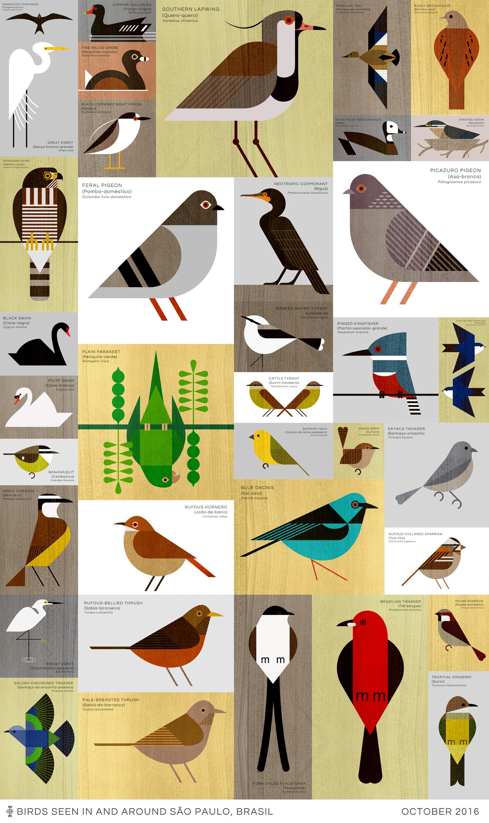 scott partridge - São Paulo Birds - illustration