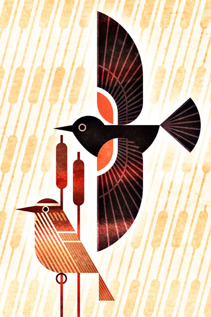 scott partridge - bird genoscape project - tricolored blackbird