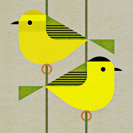 scott partridge - bird genoscape project - wilsons warbler